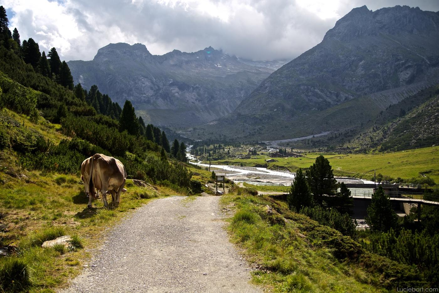 Vers la Alpenrose