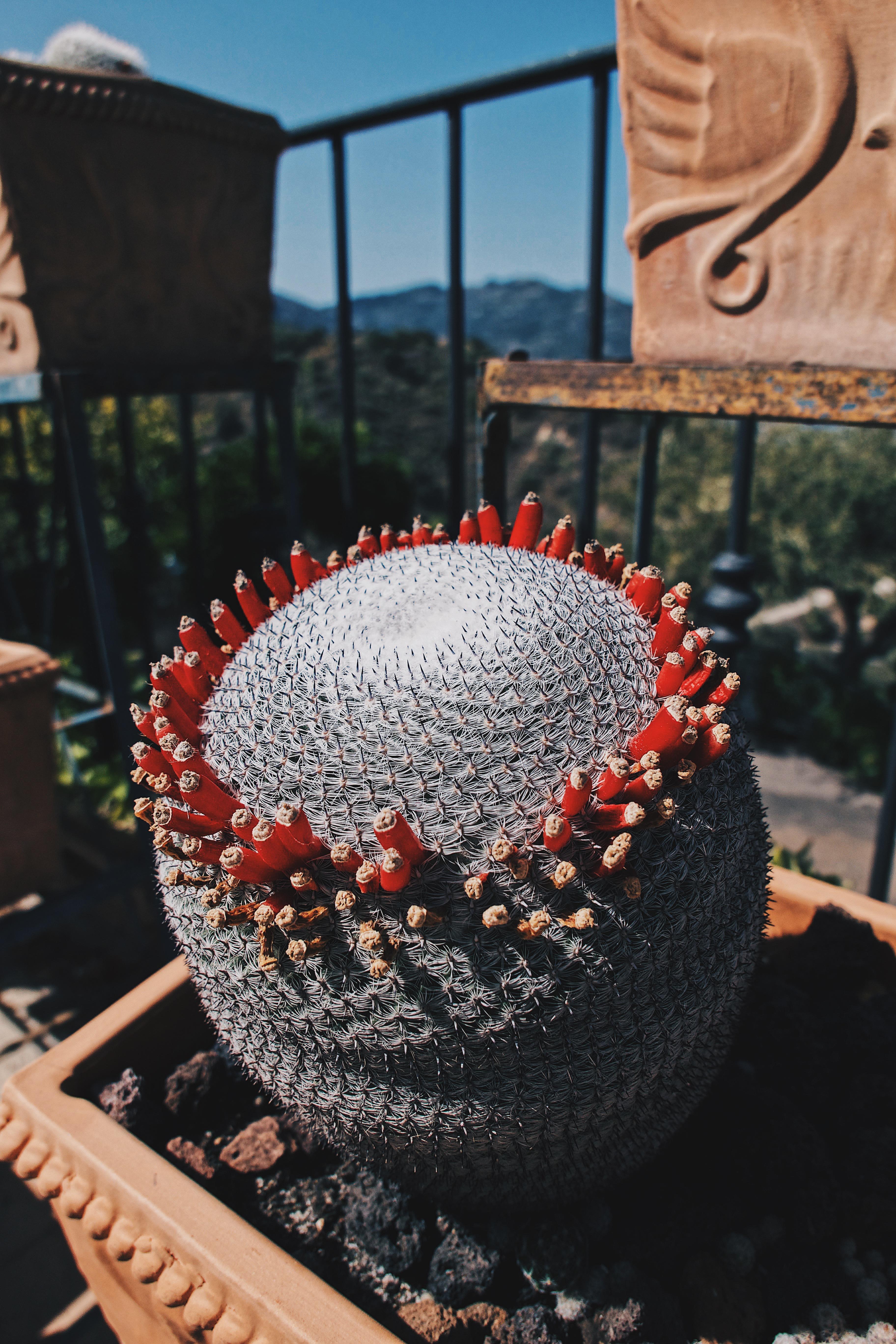 Jardin Terra Rossa
