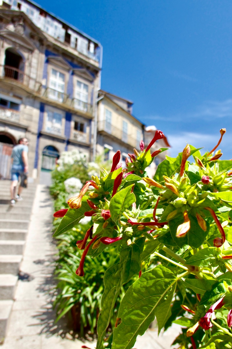 Montée vers le Mosteiro da Serra do Pilar