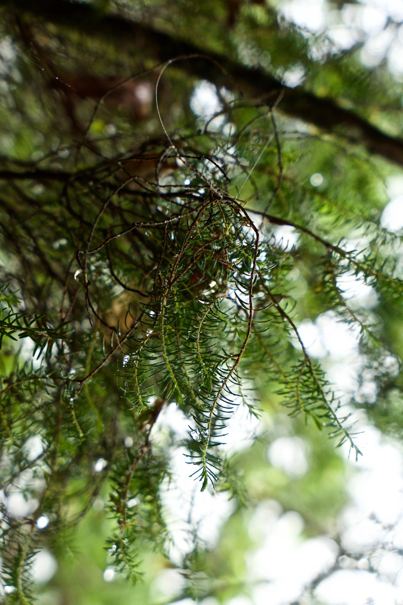 Caldeirao verde